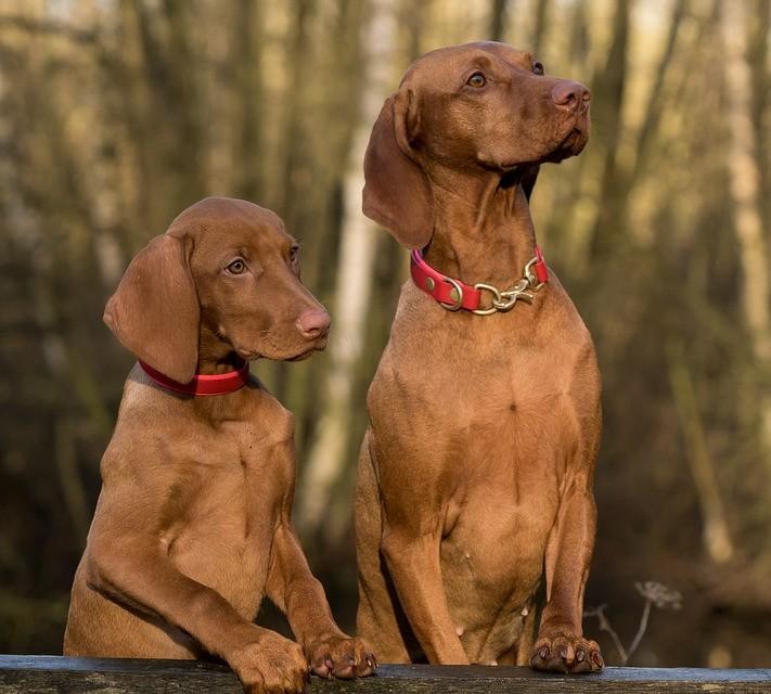 Positive dog training: the biology of motivation
