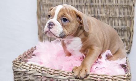 Razor-fanged Puppies